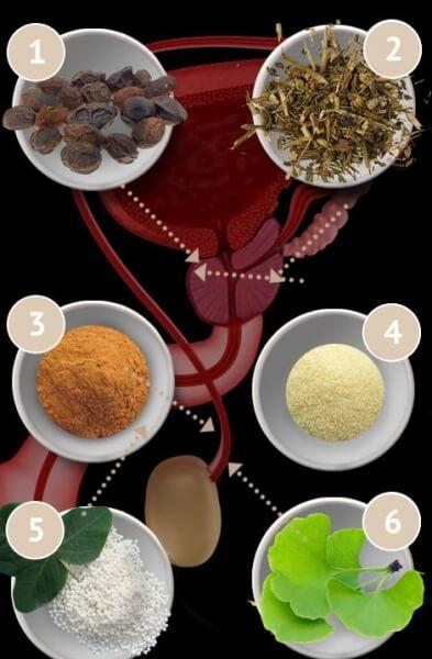 ingredienti, prostata