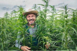 Cannabis benefici : miti e fatti