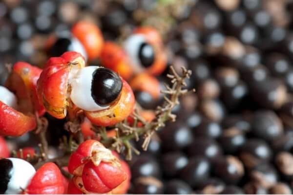 Frutta e radice di guaranà